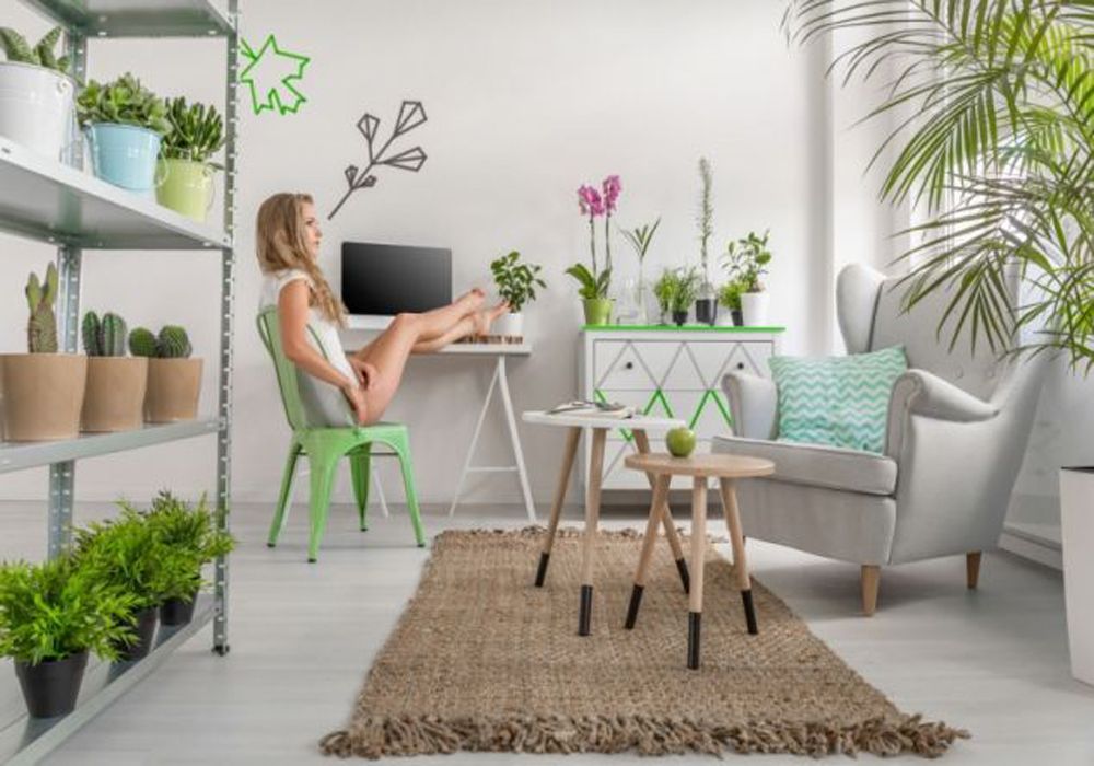 4 მცენარე, რომელიც აუცილებლად უნდა დადგათ იქ, სადაც დიდ დროს ატარებთ