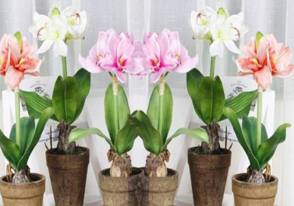 სად დავდგათ ქოთნის ყვავილები დადებითი ენერგიის მოსაზიდად?